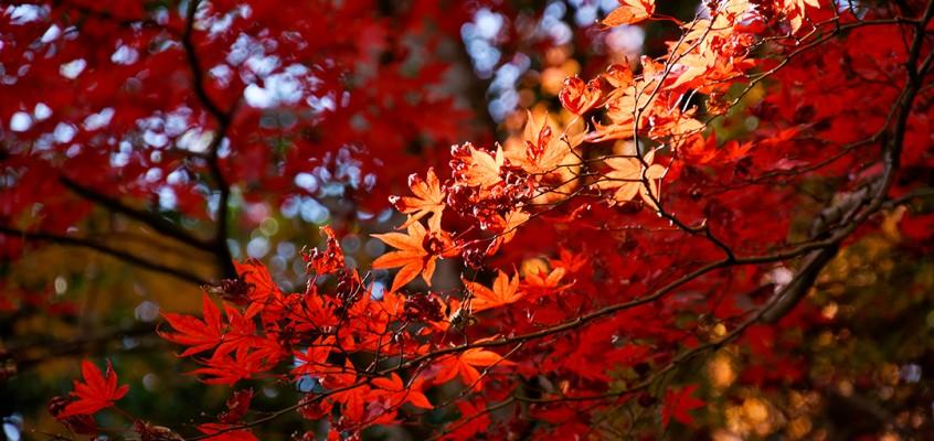 L'automne au mont Takao